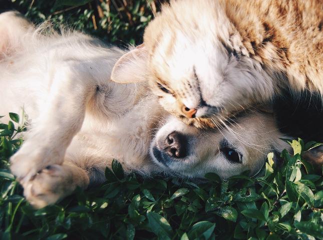Licenciamento de Canídeos e Gatídeos